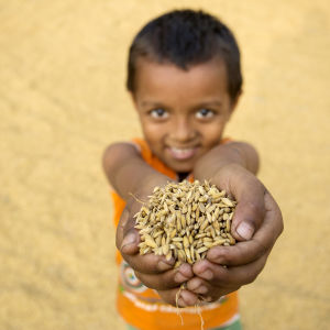 A kid offering handful of dry paddy.