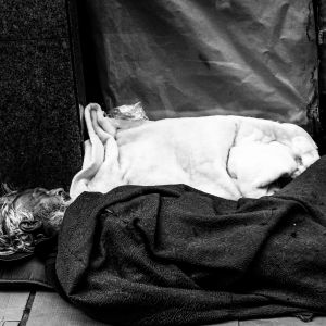 Sleep in Street